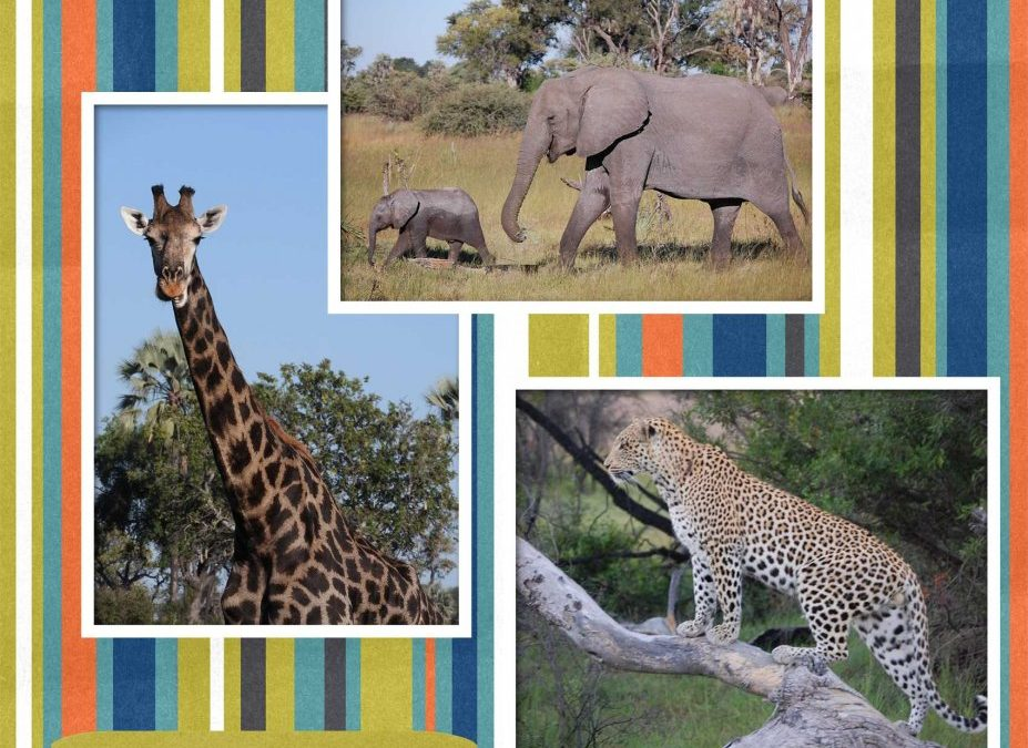 Going on Safari: 5 Lessons in Productivity